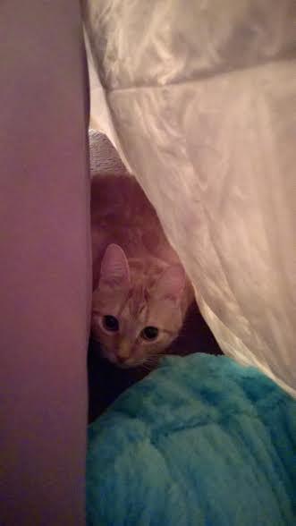 Matti's hideout